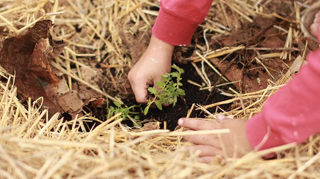 Le « bio » expliqué aux enfants - KEDGE
