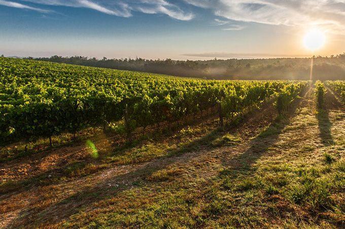 Axe recherche - Food, Wine & Hospitality - KEDGE